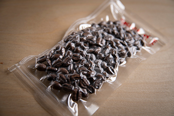freezing coffee beans