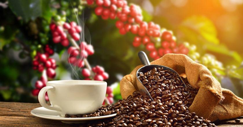 Australian coffee farms