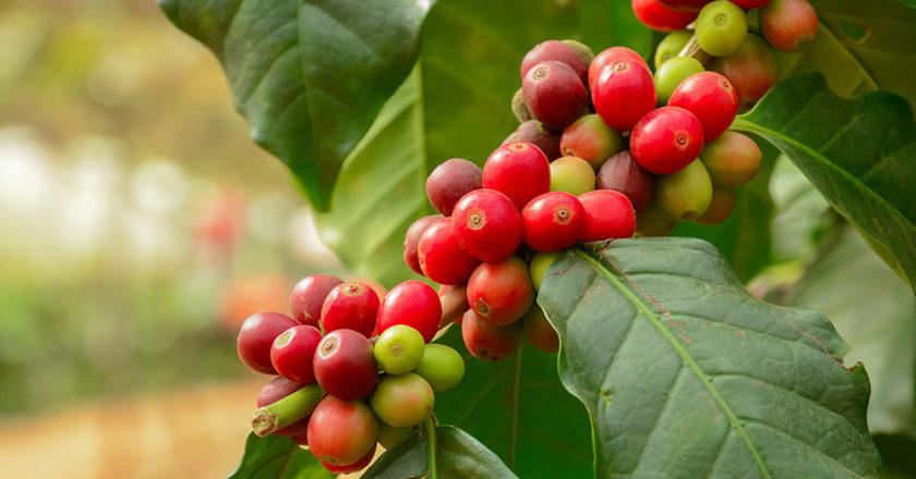 World Coffee Producers Forum price