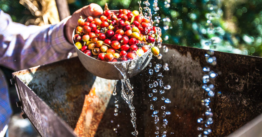 brazil colombia coffee price
