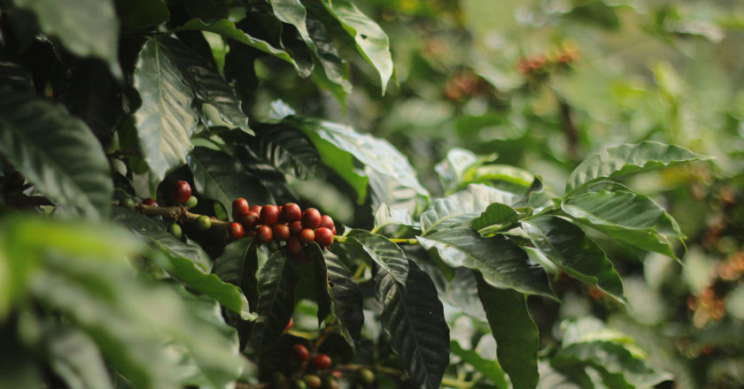 Costa RIca Cup of Excellence