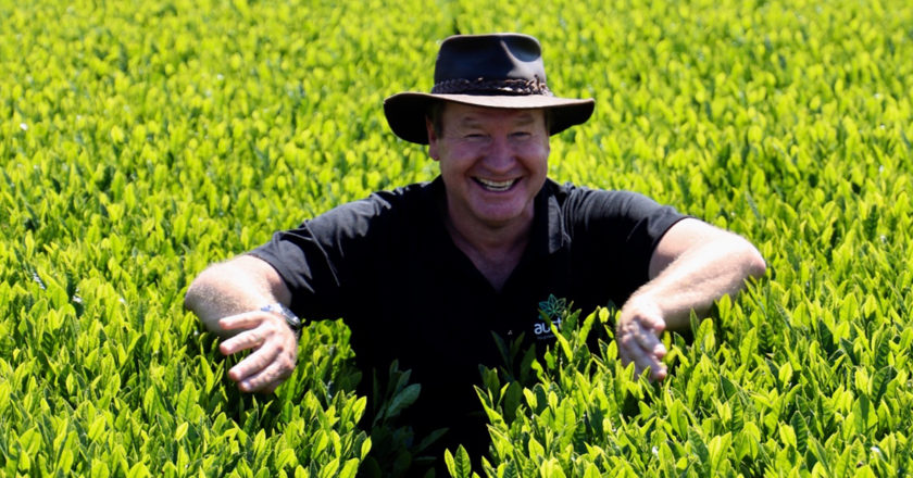 tea production Australia