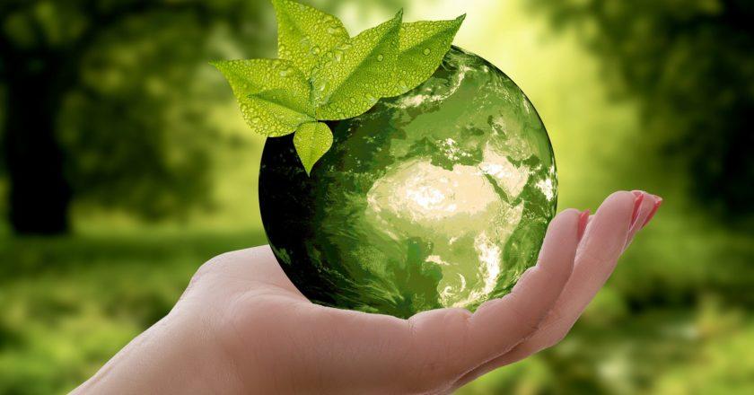 BioPak climate emergency