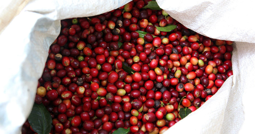 Arabica coffee prices availability