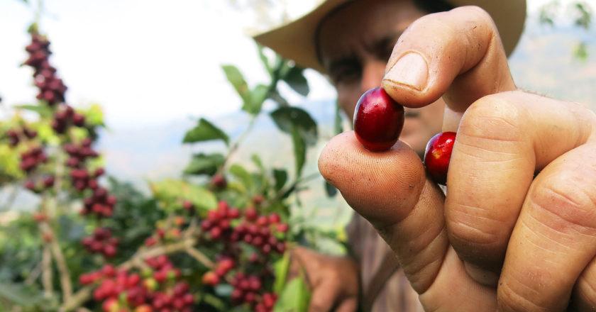 Rainforest Alliance announces enhanced certification