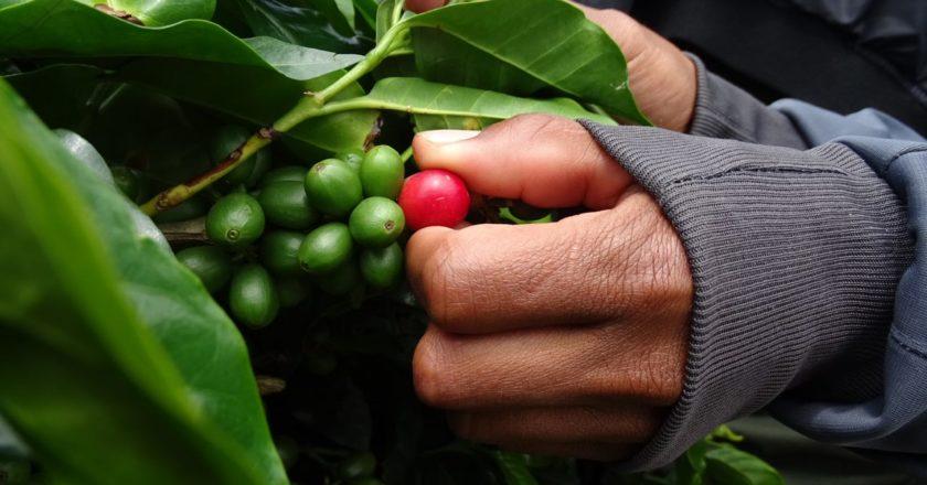 coffee for peace colombia virtual buyers caravan