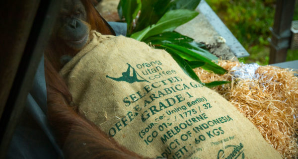 genovese coffee sustainability