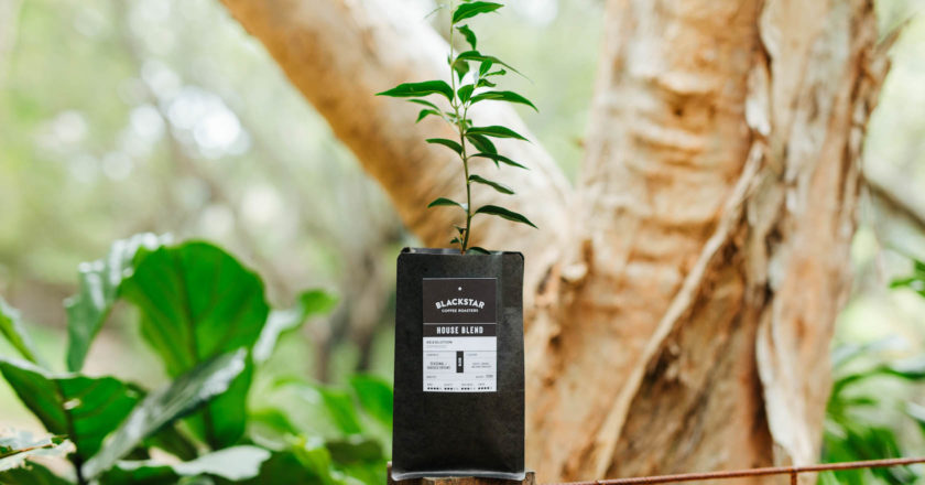 Blackstar Coffee Roasters Trees