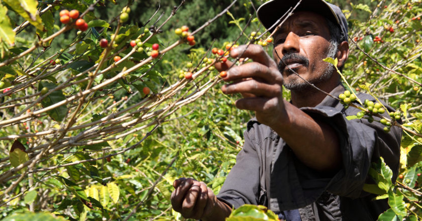 coffee farmers climate change