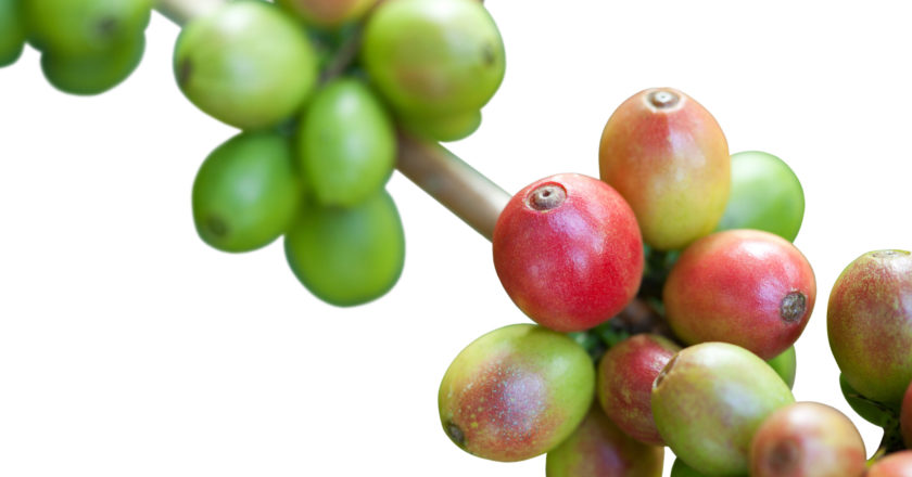 Coffee prices fall October
